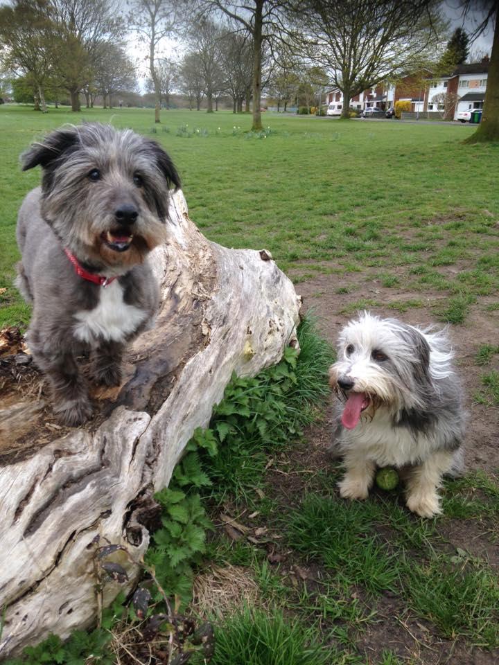 Perro en el parque