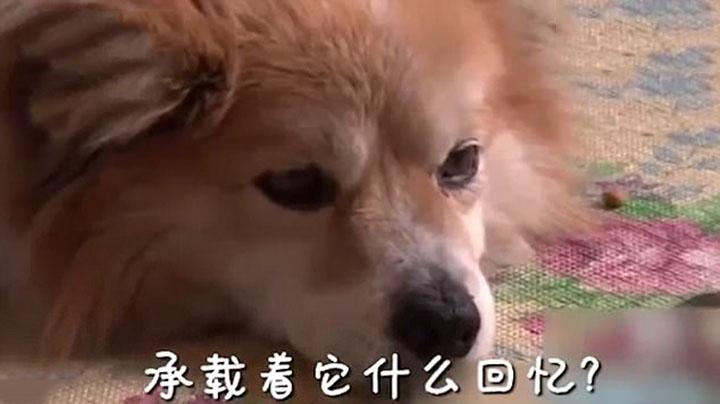 Perro espera a su madre humana