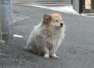 Perro esperó a su madre humana que nunca más volvió