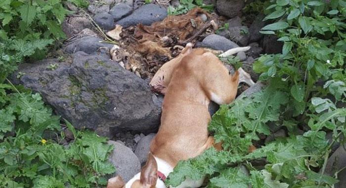 Perro fue arrojado por cazadores