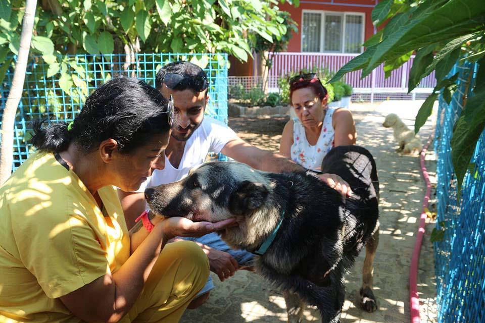 Perro fue llevado al refugio