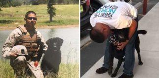 Perro invidente reconoce a su manejador canino después de 6 años