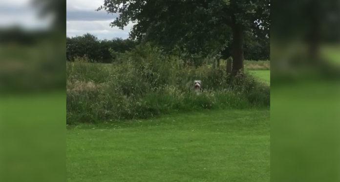 Perro se esconde cuando no quiere irse del parque