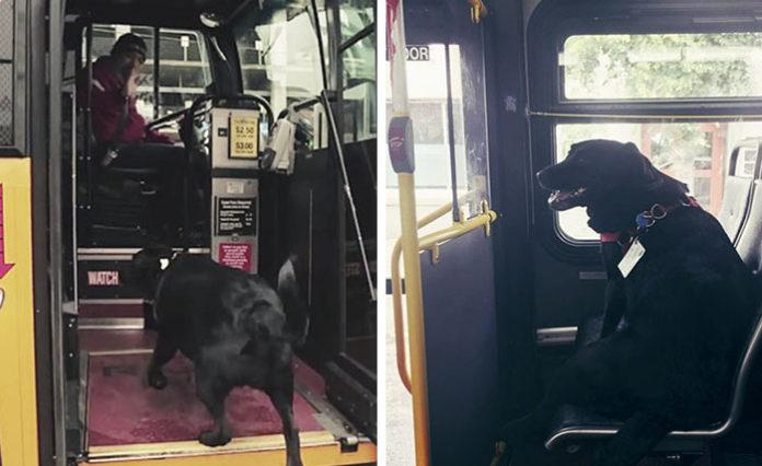 Perro toma el autobús para ir al parque canino