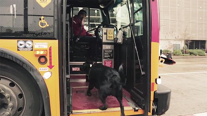 Perro toma el autobús