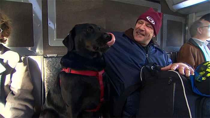 Perro viajando en autobús