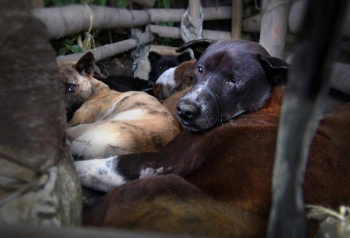 Perros asesinados para su comercio