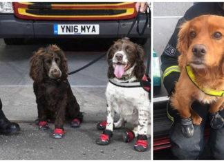 Perros ayudan en el rescate de víctimas del incendio de la torre Grenfell
