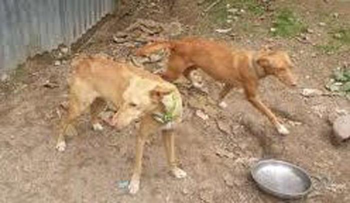 Perros desechados