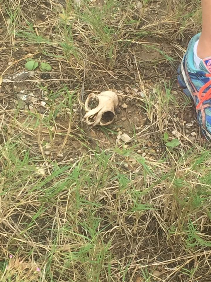 Restos del cachorro muerto