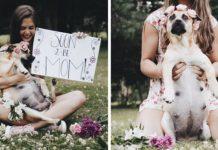 Sesión de fotos de maternidad de una perra embarazada