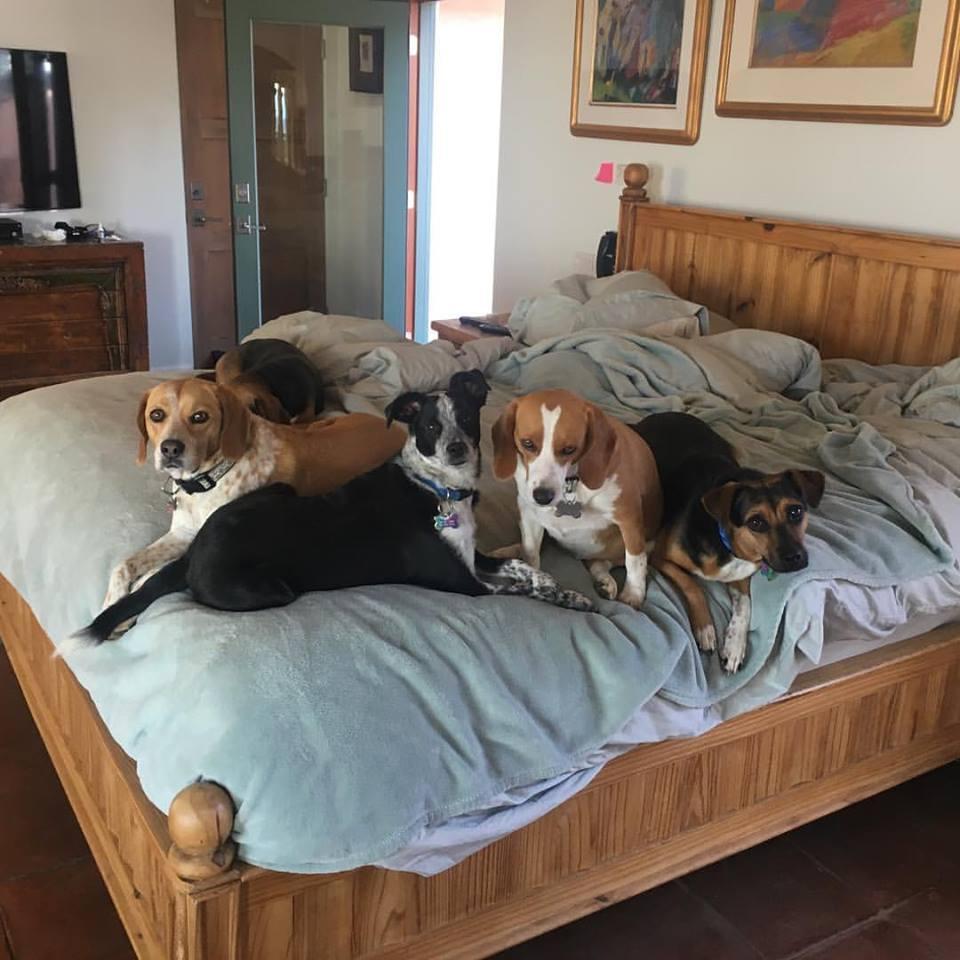 Toots y sus hermanos