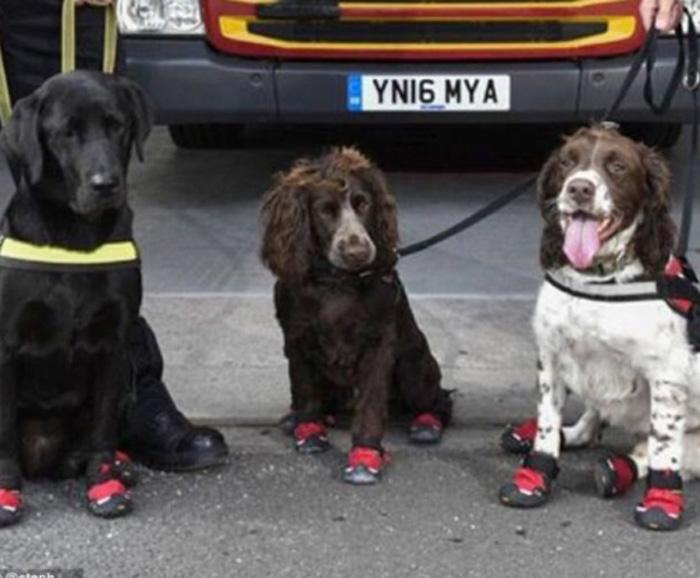Zapatos especiales para los perros