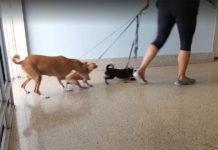 Abandona a sus tres perros en un refugio
