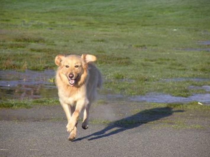 Alfie corre feliz