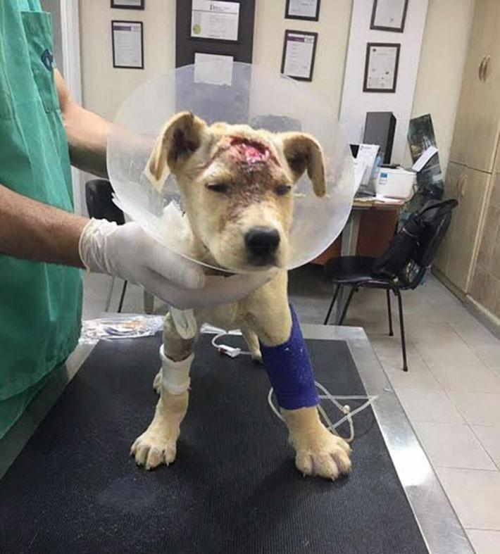 Bondok en el veterinario