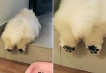 Cachorro muestra sus patitas adorables