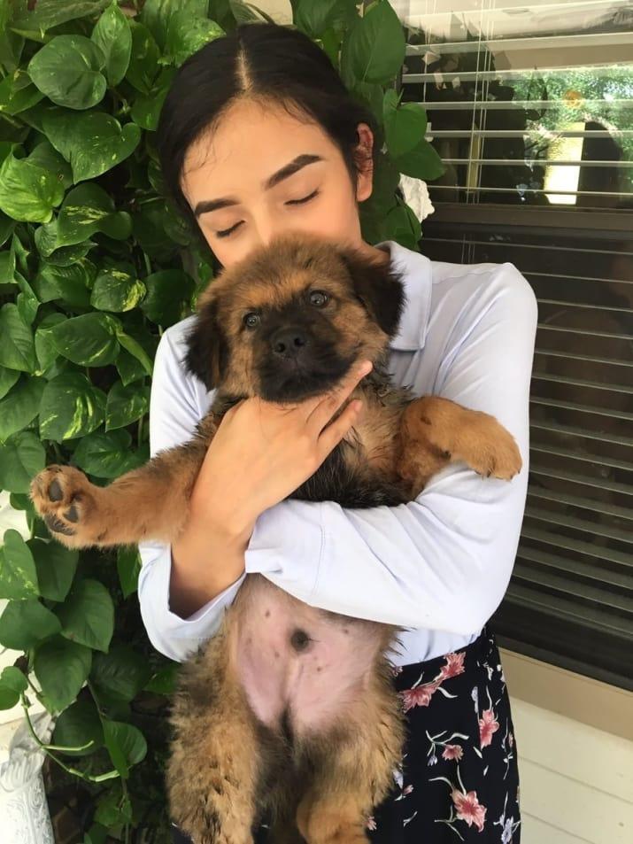 Cada aniversario adoptan perro