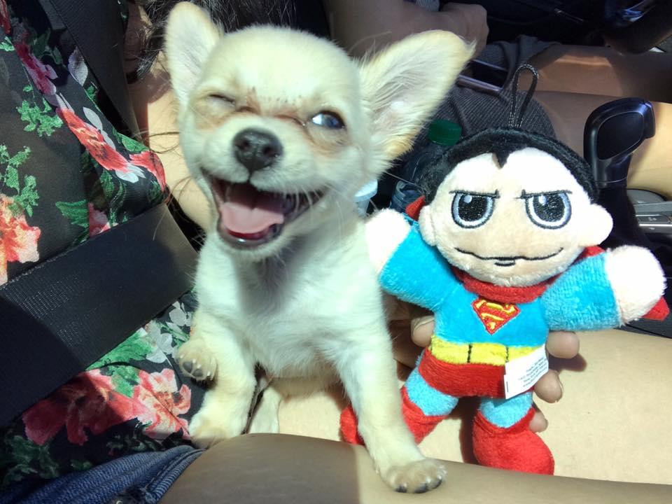 Chewy cachorro