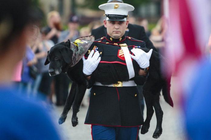Despiden perro de la marina con cancer terminal