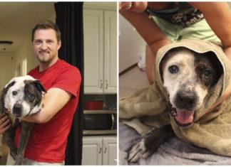 Esta familia rescató a un perro moribundo