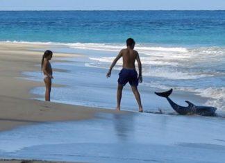 Familia salva delfín varado en la playa