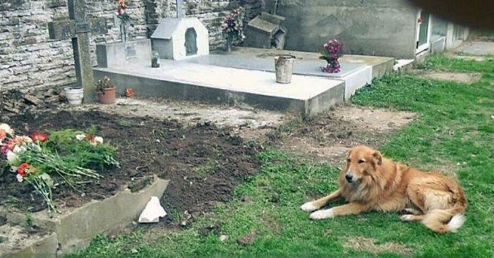 Firulai vive junto a la tumba de su familia