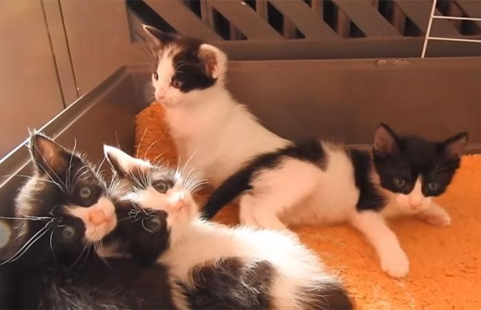 Gatitos rescatados