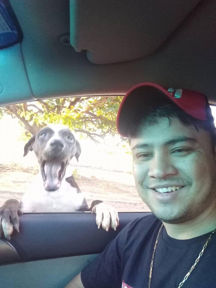 Hombre alimenta perros sin hogar
