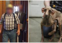 Hombre tenía a 64 perros en condiciones deplorables