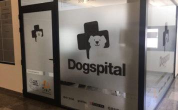 Hospital permite que pacientes reciban visitas de sus perros