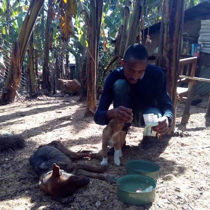 Ismael ayuda a los perros