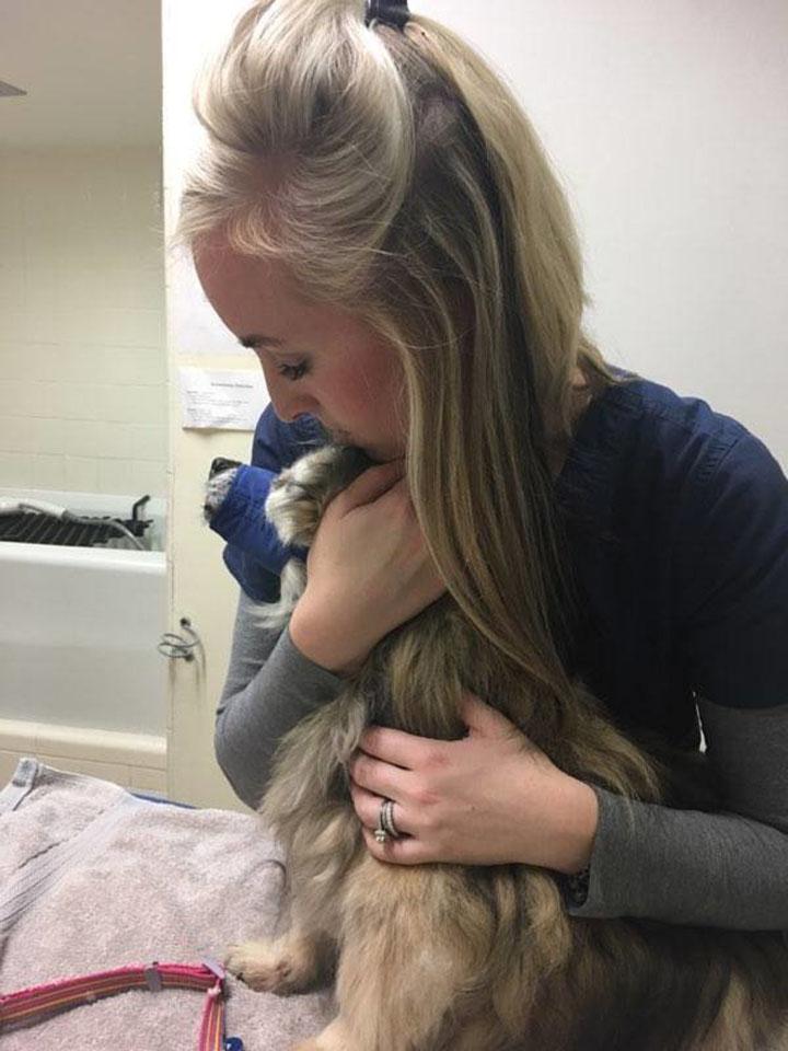 Jaripo en el veterinario