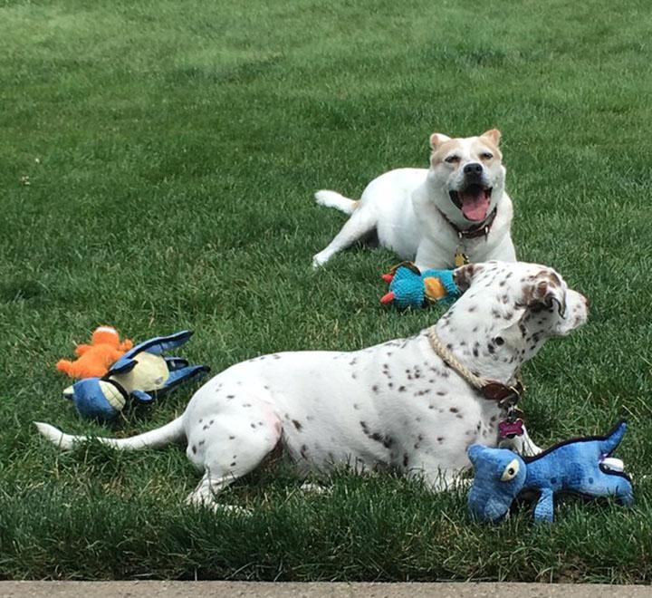 Jojo y su amigo