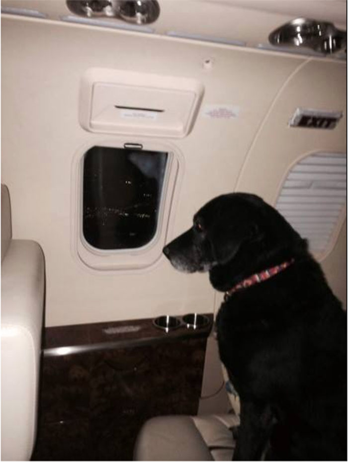 Lady en el avión