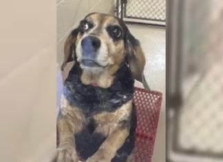 Mujer abandona perra y pide que la sacrifiquen
