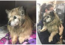 Mujer rescata pequeño perro viejo abandonado
