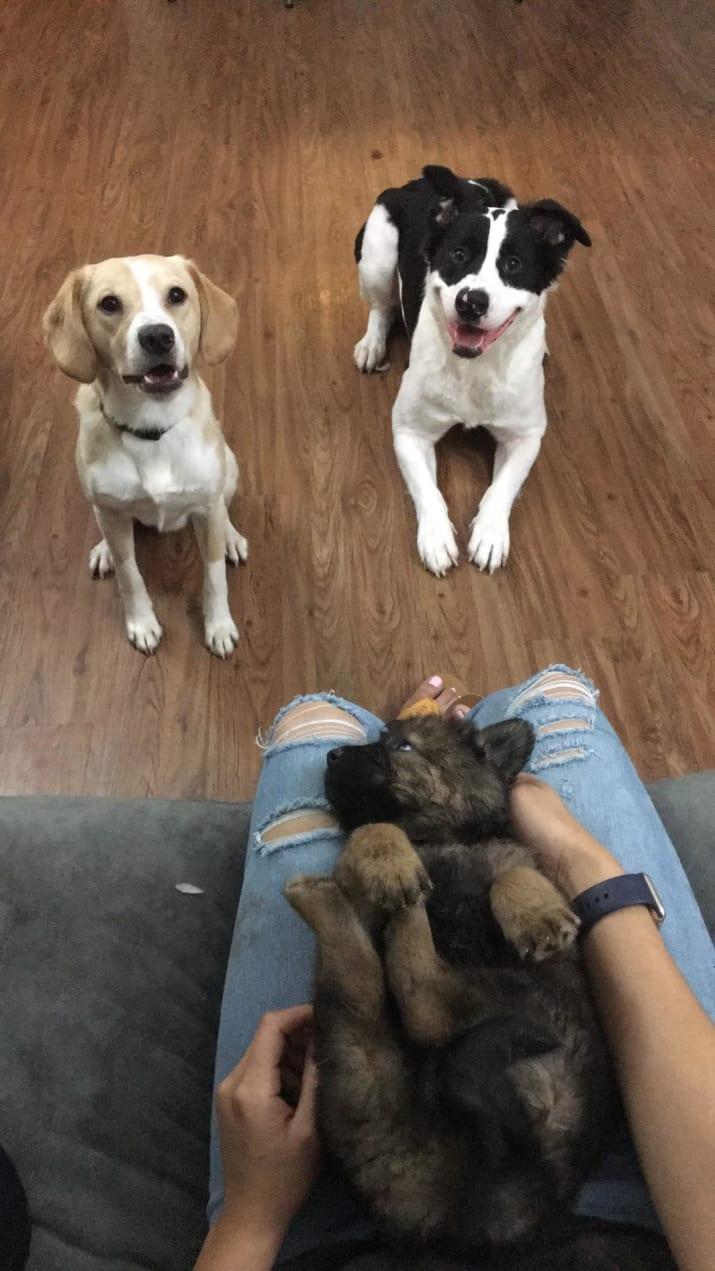 Pareja adopta perros