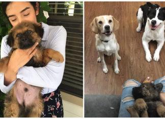 Pareja adopta un perro cada aniversario