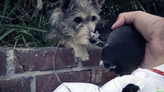 Perra espera a que sus cachorros sean rescatados