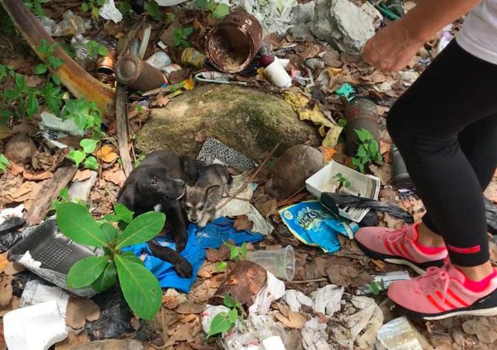 Perrito abandonado cuidando de otros