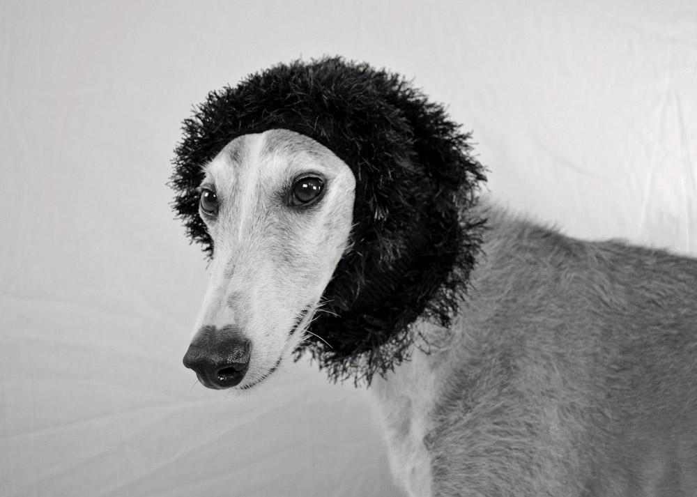 Perro de raza canina galgo