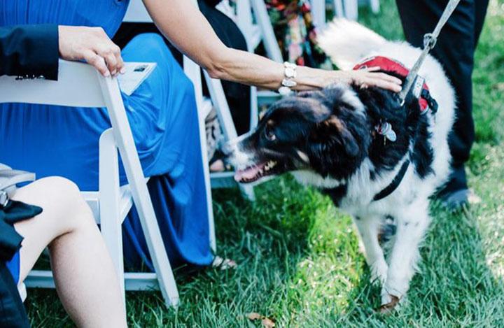 Perro de tres patas en una boda