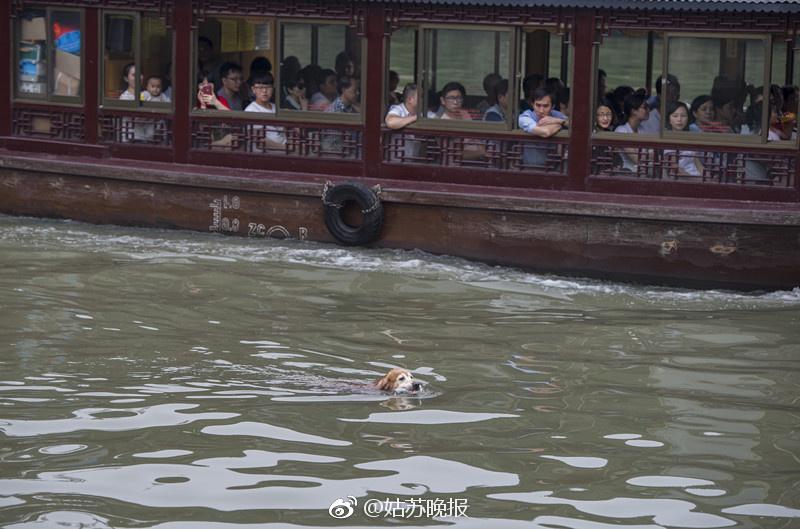 Perro en río de China sacando basura