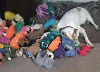 Perro encerrado 8 años ahora tiene cientos de juguetes