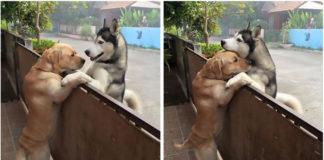 Perro escapa del patio para abrazar a su mejor amigo