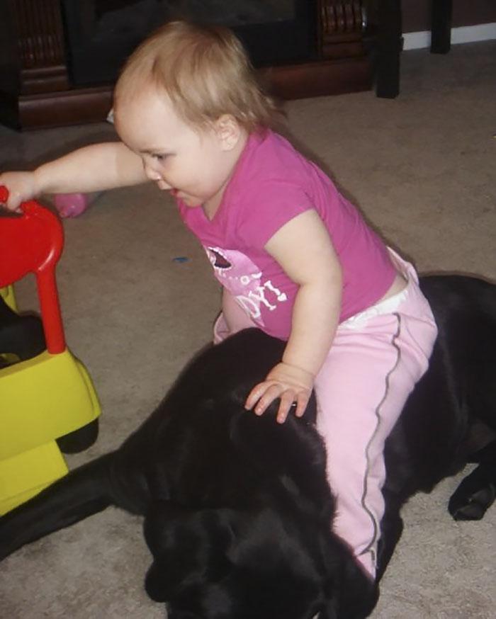 Perro labrador y bebe