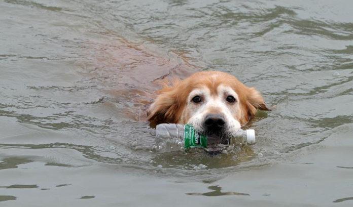 Perro limpia la basura de un río
