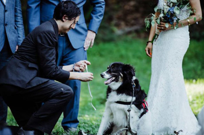 Perro lleva los anillos de la boda