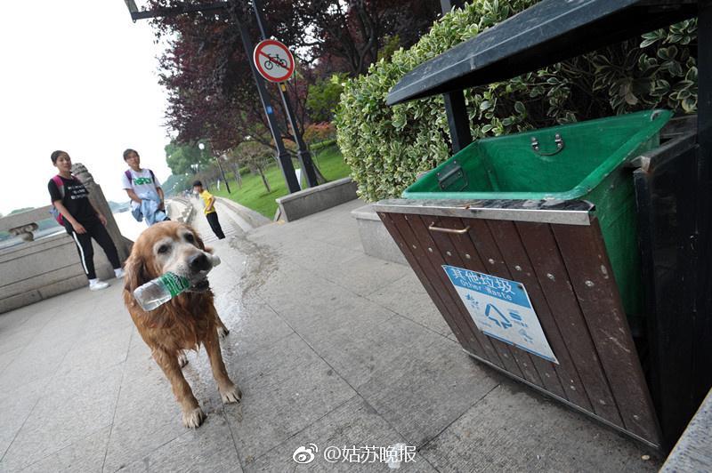 Perro reciclando